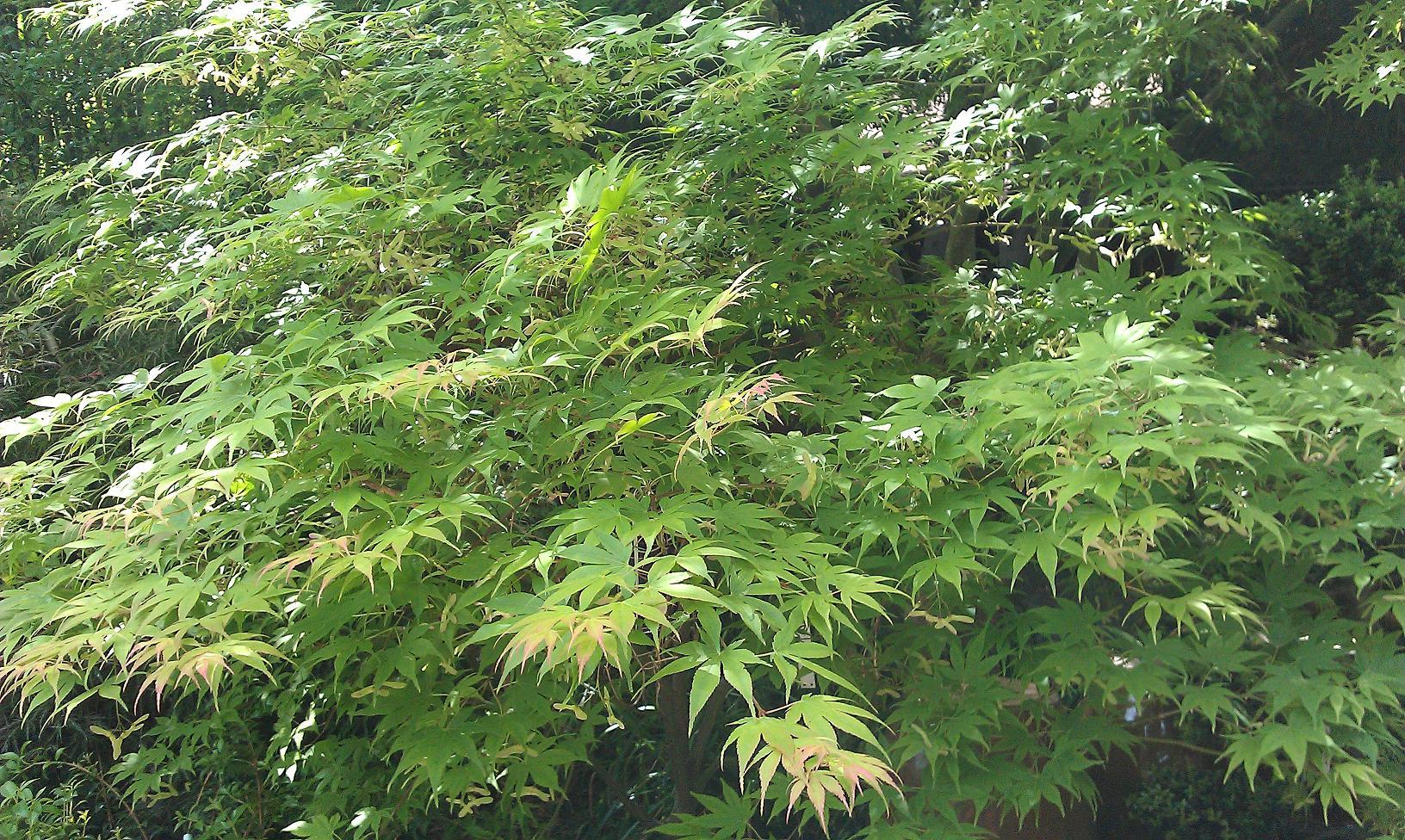 Bambous conception et am nagement de jardins jardins for Plantes decoratives jardin